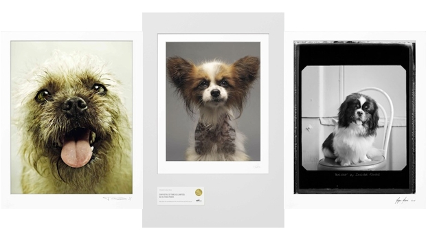 Limited Edition_CatsDogs_620x349