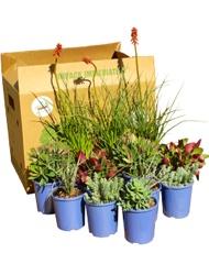 Gardens-in-a-box