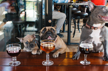 Melbourne's Best Dog-Friendly Establishments