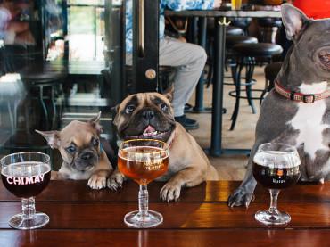 Melbourne's Best Dog-Friendly Establishments