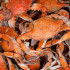 Get Cracking at The Morrison's Crab Carnival