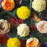 Cake and Bloom Blooming Marvellous Cupcakes