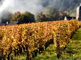 Sydney's wine lover guide to Burgundy