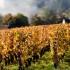 Sydney's wine lover guide to Burgundy