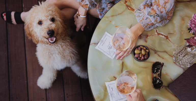 Bopp & Tone goes dog friendly as its Terrace opens for those on all 'paws'