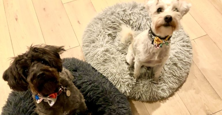 Stylish hound makes a Dog's life a luxe one